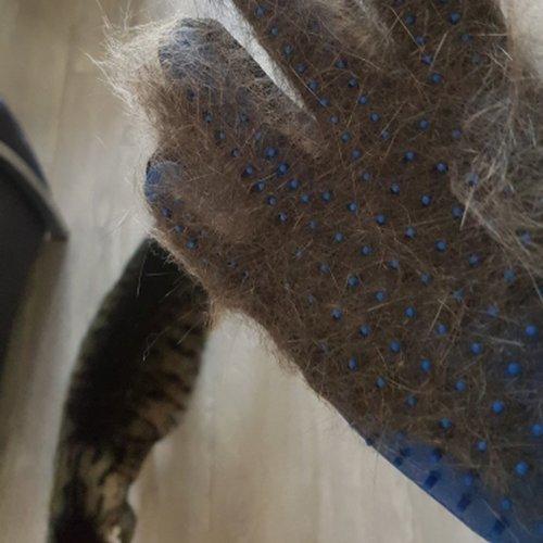 Nowoczesna rękawica do czesania zwierząt poprzez głaskanie